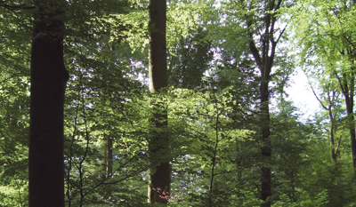 stratégiai erdészeti lehetőségek